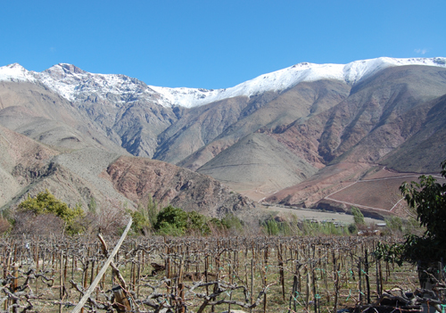 Elqui Valley Pisco Vines